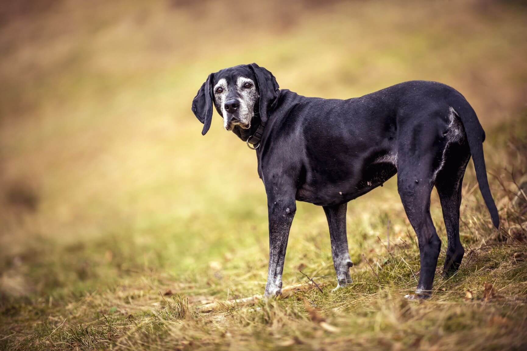 Life with a Senior Dog: How to Keep Them Healthy