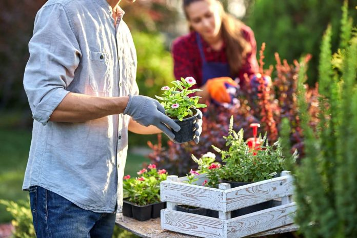 How Gardening Can Improve Your Health and Your Home